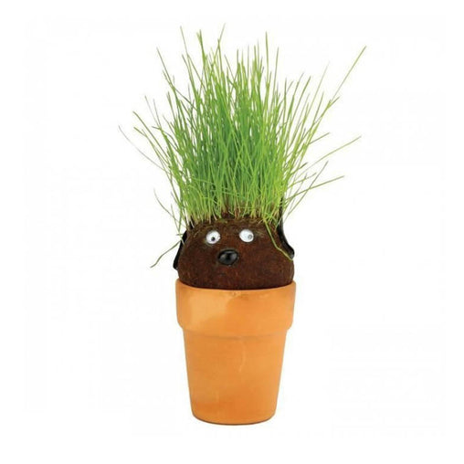 Mrs Green Pot Head Plant