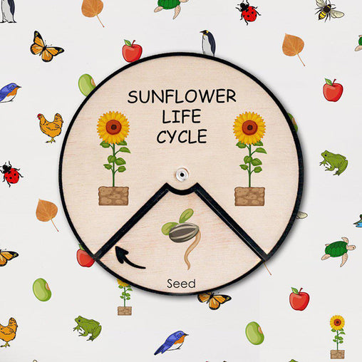 Minisko Learning Wheel Plant Lifecycles Sunflower
