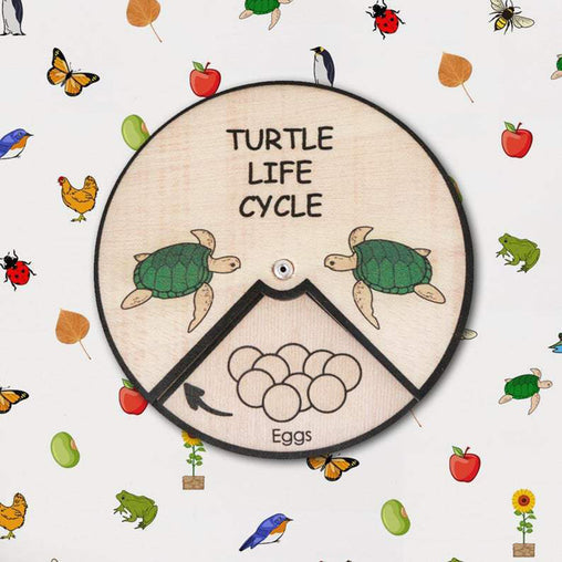 Minisko Learning Wheel Animal Lifecycle Turtle