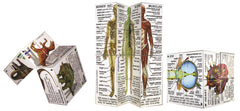 Zoobookoo Cube Book Human Body 4