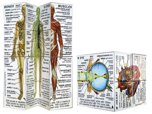Zoobookoo Cube Book Human Body