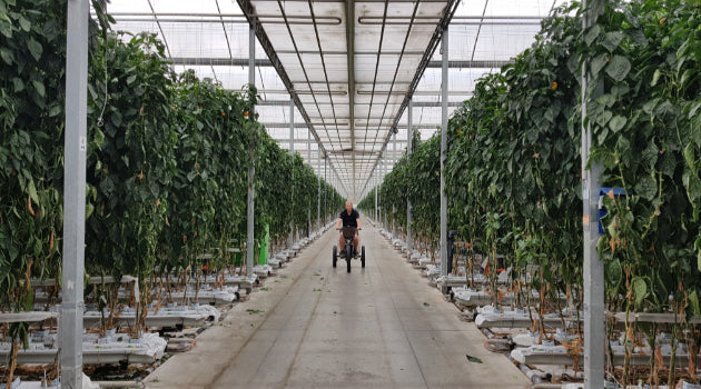 Electric Trike Greenhouse Mobility Solutions