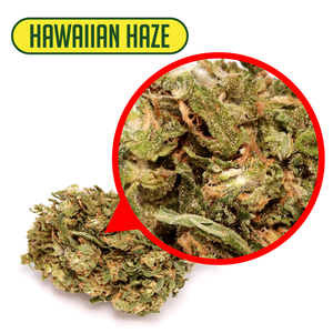 Hometown Hero - CBD Flower Hawaiian Haze 3.5gms
