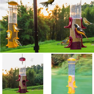 Bird Feeder Outdoor