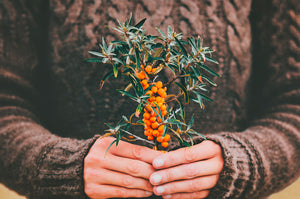 Miracle Sea Buckthorn - Not just a Berry - Sea Buckthorn images
