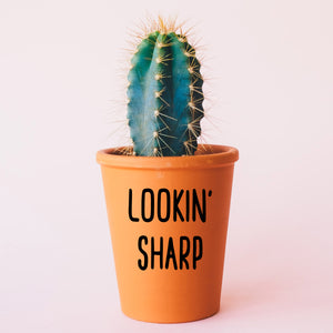 Lookin' Sharp Plant Pot Decal