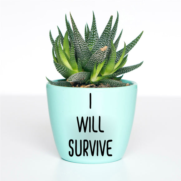 I Will Survive Sharp Plant Pot Decal