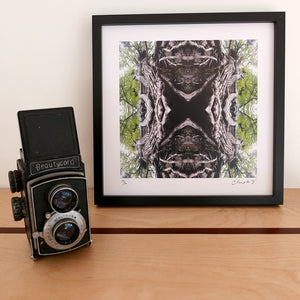 Beech Lace, Black Frame