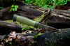 Morakniv Outdoor 2000 rostfri grön 115/230 mm