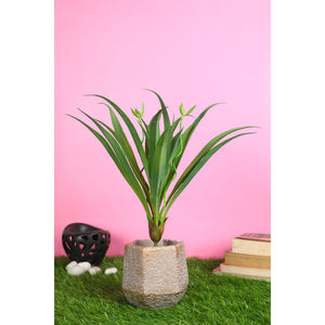 Pollination Stunning Artificial Green Yucca Plant without Pot  for Home Decor (Pack of 1)
