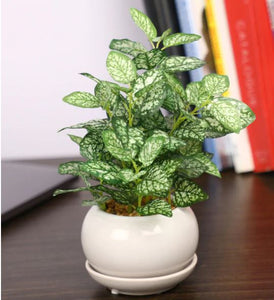 PolliNation Nearly Natural Artificial Bonsai with White Ceramic Pot (Pack of 2)