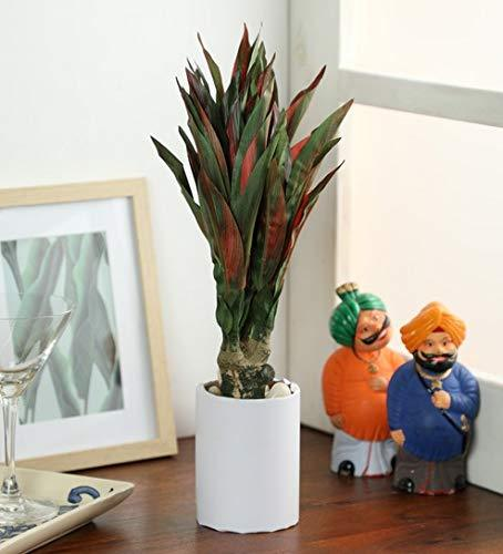 Artificial Plant with Pot  (37.5 cm, Multicolor) - Artificial Flowers & Plants - PolliNation