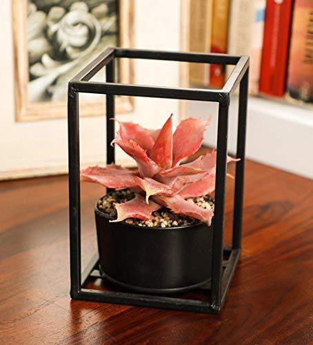 PolliNation Green Mitre Aloe  Artificial Succulent in Black Metal Stand