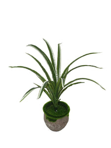 PolliNation Artificial Green Spider Bush Bunch for Home,Office, Restaurant, Hotel, Party, Balcony, Garden Décor, Indoor (Pack of 1, 45 cm) - Artificial Flowers & Plants - PolliNation