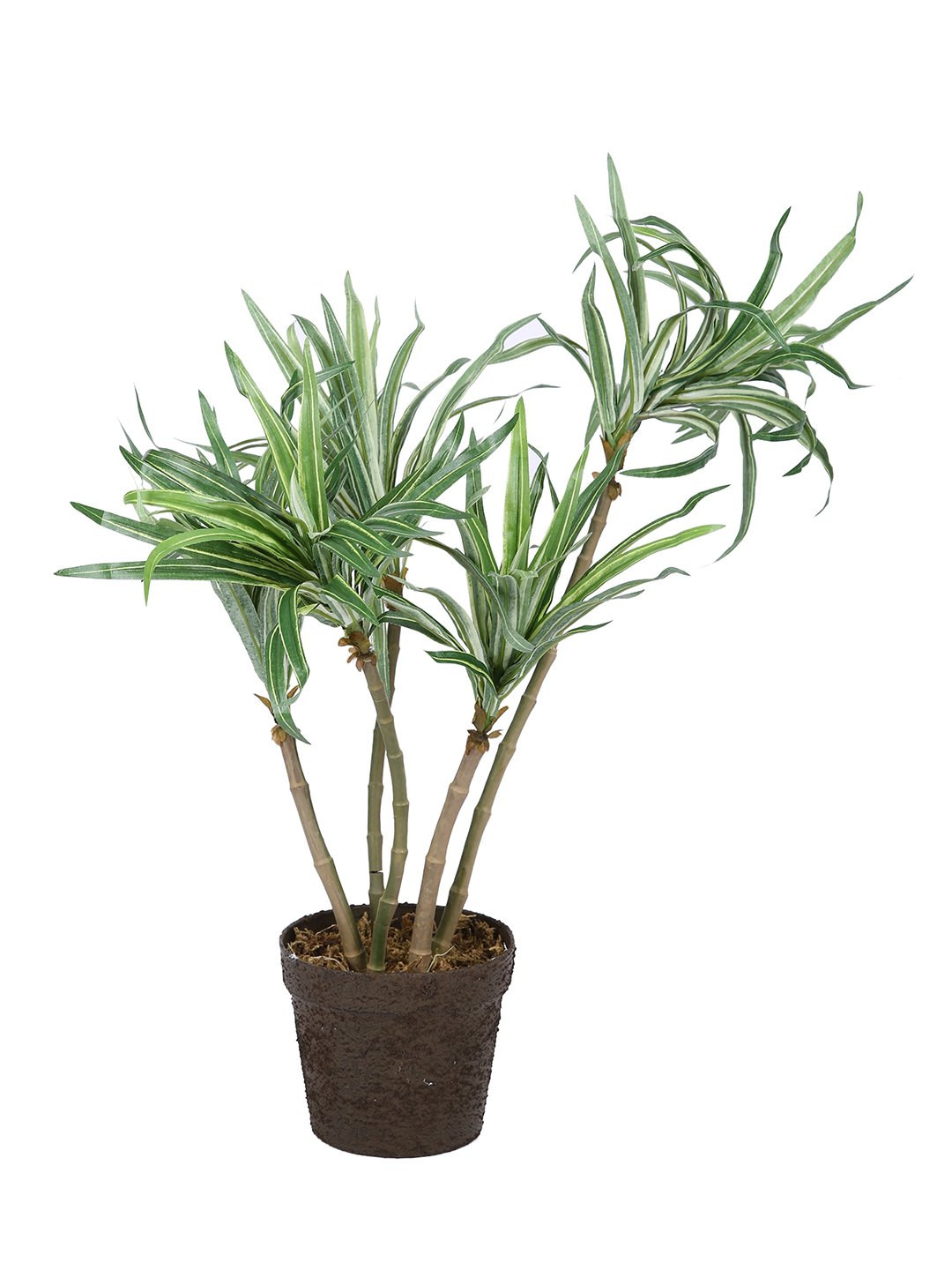 Artificial Draceana Plant With Pot ( L 48 cm X H 57 cm ) - Artificial Flowers & Plants - PolliNation