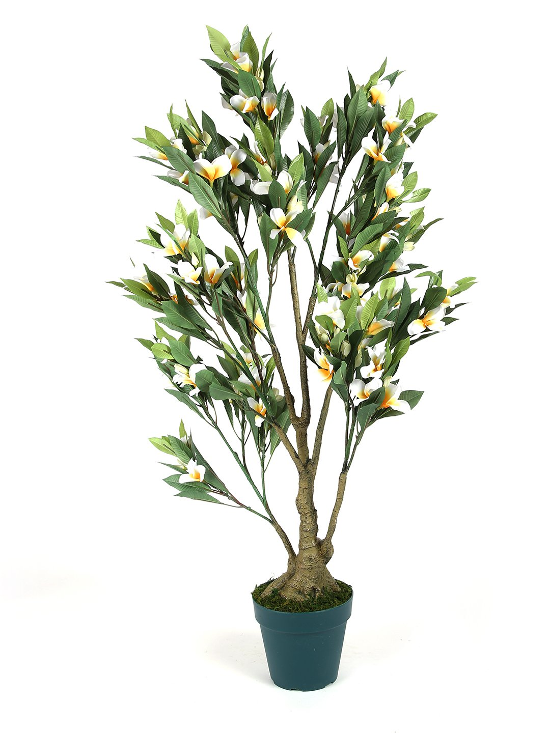 Artificial Frangipani Plant With Pot (L 60 cm X 114 cm )