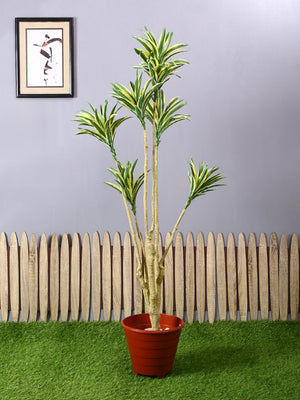 Artificial Dracaena Plant Without Pot