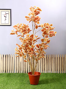 PolliNation Premium Brown Wild Coffee Artificial Plant Without Pot for Home Decoration (L 84 cm X H 153 cm) - Artificial Flowers & Plants - PolliNation