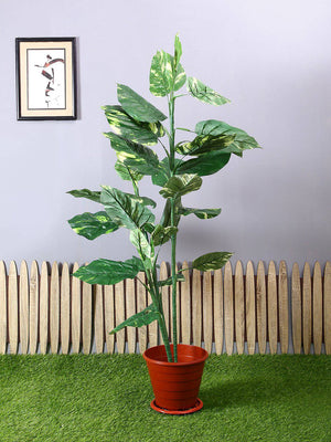 Artificial Phothos Philo Plant Without Pot