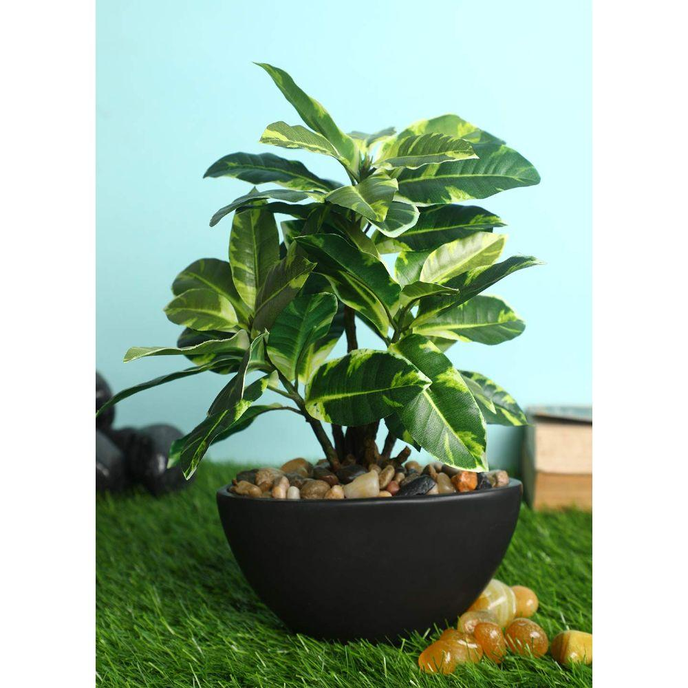 PolliNation Attractive Artificial Green Quercus Bonsai with Black Ceramic Pot for Home,Office, Restaurant, Hotel, Party, Balcony, Garden Décor, Indoor (Pack of 1, 12 INCH) - Artificial Flowers & Plants - PolliNation