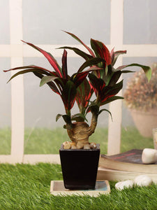 Pollination Attractive Artificial  Brown Dracaena Bonsai with Brown Ceramic Pot (Pack of 1, 27 cm) - Artificial Flowers & Plants - PolliNation