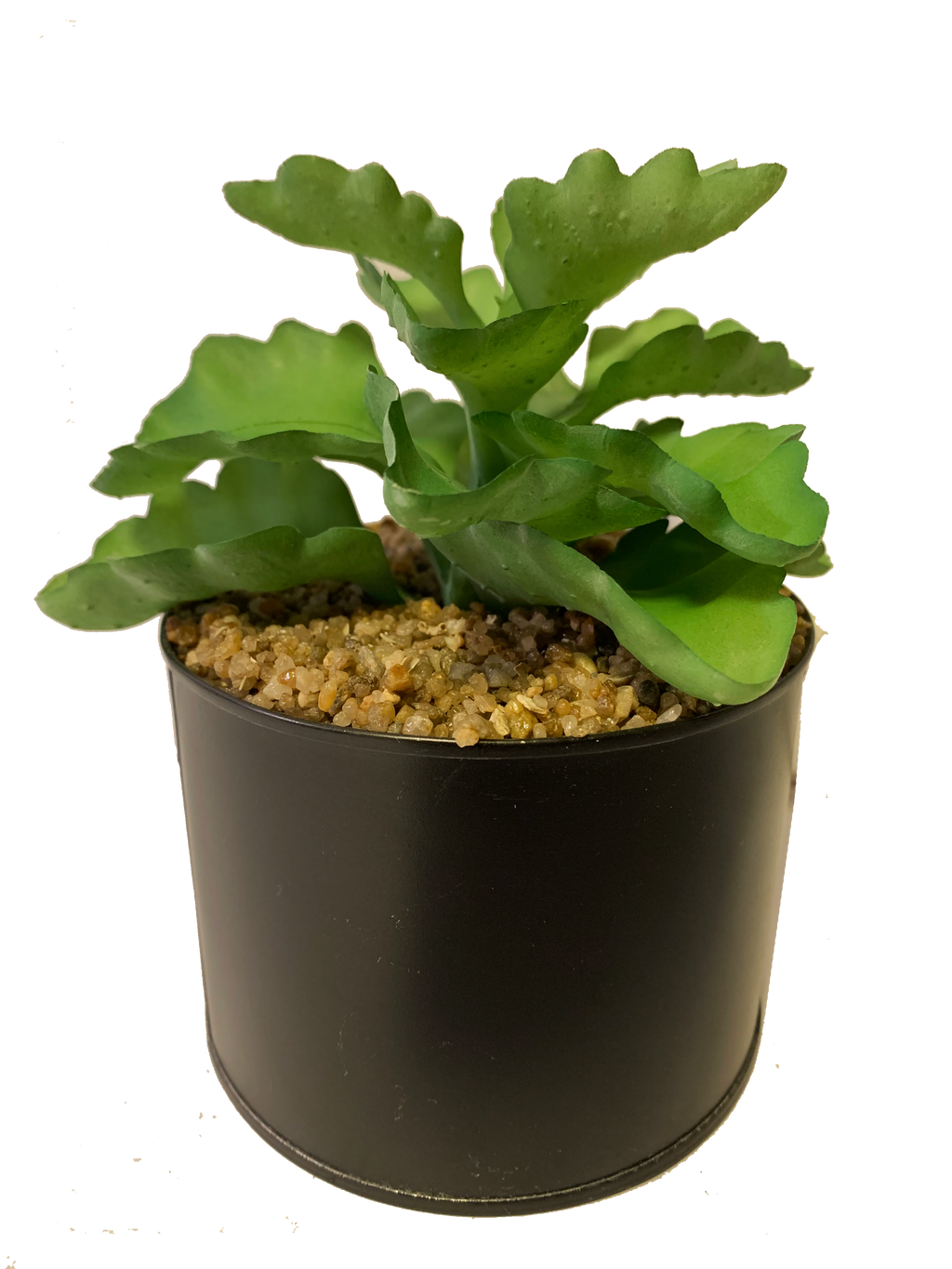 PolliNation Elegant Artificial Green Succulent With Metal Pot (Pack of 2)