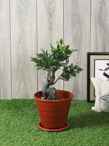 Artificial Green Ficus Plant Without Pot