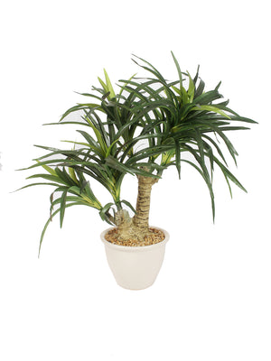 Polination Artificial Yucca Bonsai Plant With Ceramic Pot