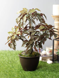 Pollination Premium Artificial Green Ficus Bonsai with Brown Ceramic Pot for Indoor Decoration (Pack of 1, 14 INCH) - Artificial Flowers & Plants - PolliNation