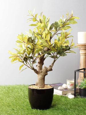 PolliNation Stunning Artificial Red Croton Bonsai with Black Ceramic Pot