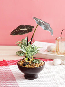 Artificial Green Zebra Bonsai in Brown Ceramic Pot for Home