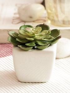 Artificial Succulent Bonsai With Ceramic Pot Set of 2 ( L 6 X H 7.5 cm ) - Artificial Flowers & Plants - PolliNation