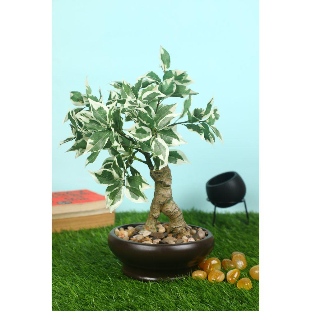 Pollination Enticing Artificial Green Schefflera Bonsai with Black Ceramic Pot