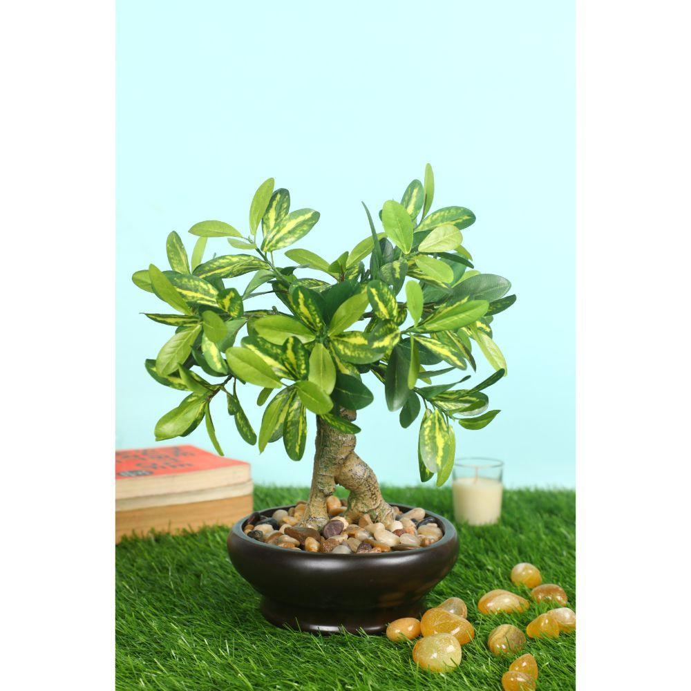 Roll over image to zoom in Pollination Enticing Artificial Green Schefflera Bonsai with Black Ceramic Pot (Pack of 1, 12 INCH) - Artificial Flowers & Plants - PolliNation
