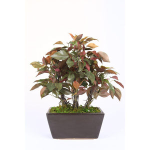 Pollination Premium Artificial Green Ficus Bonsai with Brown Ceramic Pot for Home Deocration Gifting  (Pack of 1, 13 INCH) - Artificial Flowers & Plants - PolliNation