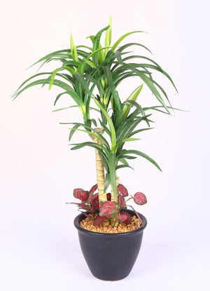 PolliNation Stunning Artificial White Yucca Bonsai with Black Ceramic Pot for Home Decor, Gifting (Pack of 1, 18 INCH) - Artificial Flowers & Plants - PolliNation
