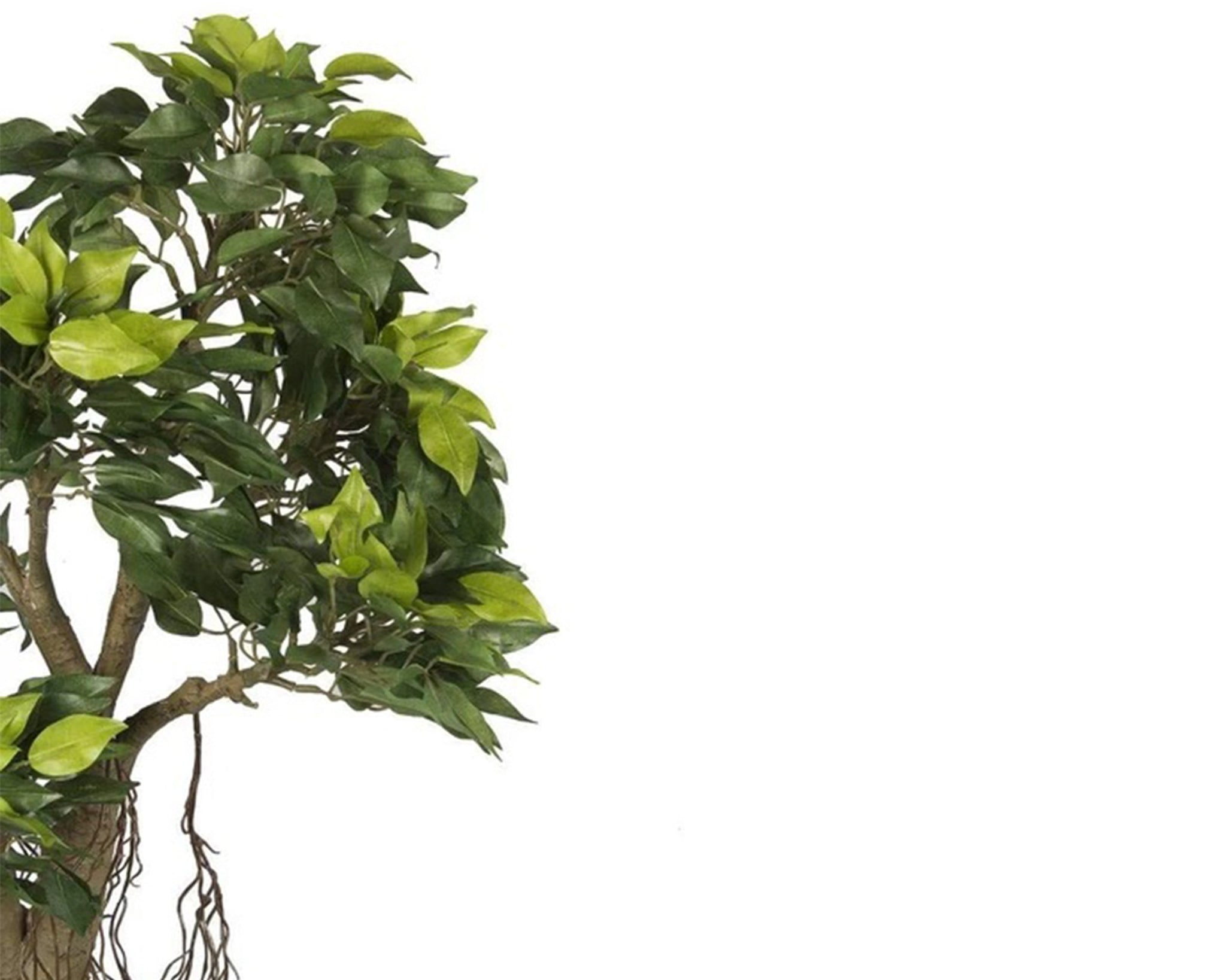 Roll over image to zoom in PolliNation Alluring Artificial Green Ficus Bonsai Plant Without for Home Decor Pot ( L 35 cm x H 55 cm) - Artificial Flowers & Plants - PolliNation
