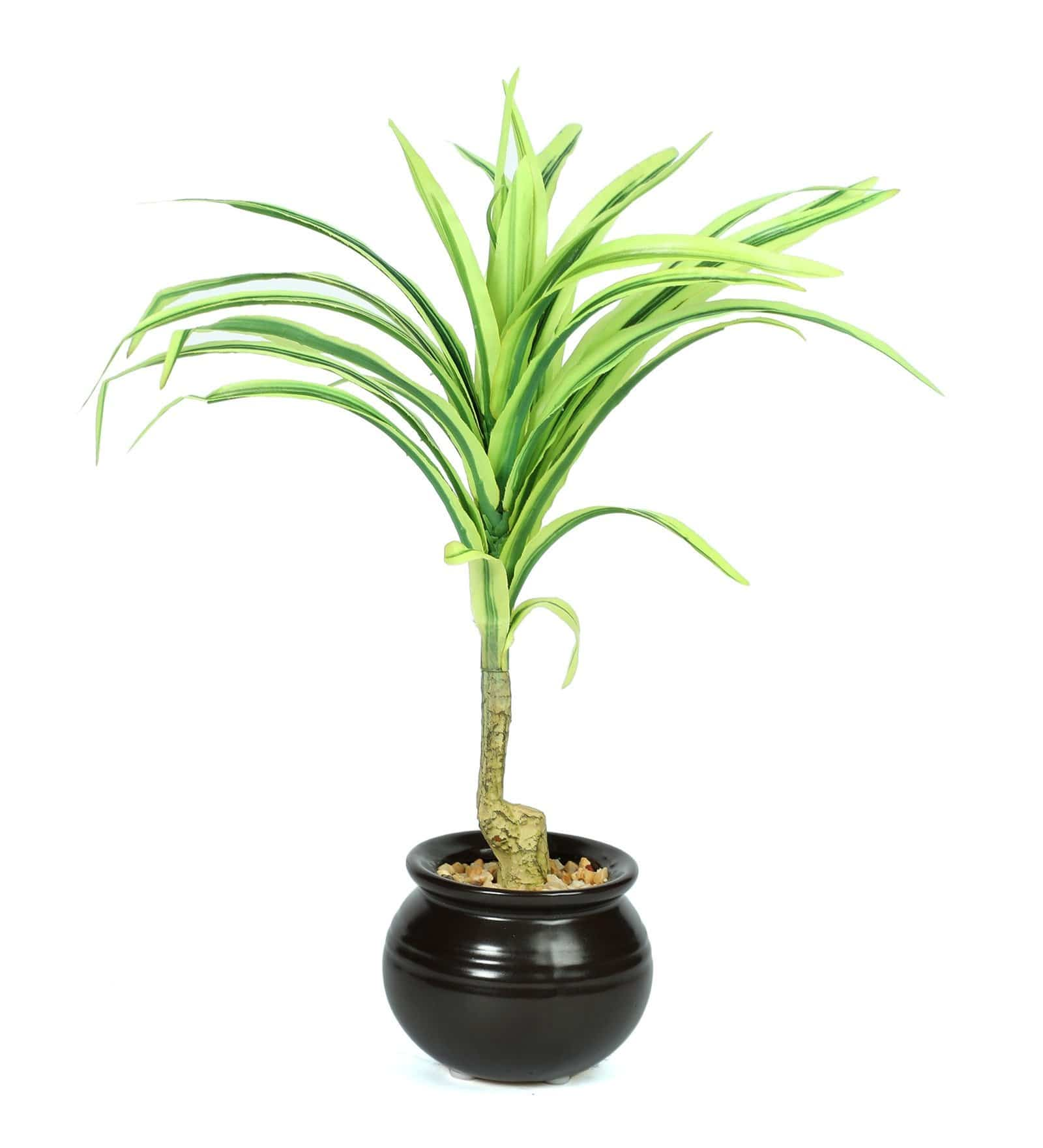 Artificial Bonsai tree in Ceramic Pot for decoration  ( L 15 X H 30 cm ) - Artificial Flowers & Plants - PolliNation