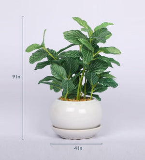 PolliNation Nearly Natural Artificial Yellow Green Bonsai with White Ceramic Pot (Pack of 2)