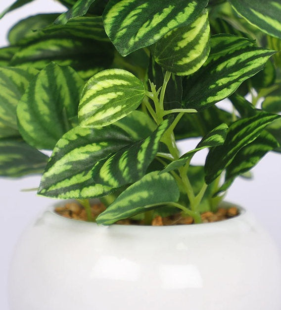 PolliNation Nearly Natural Artificial Striped Bonsai with White Ceramic Pot (Pack of 2)