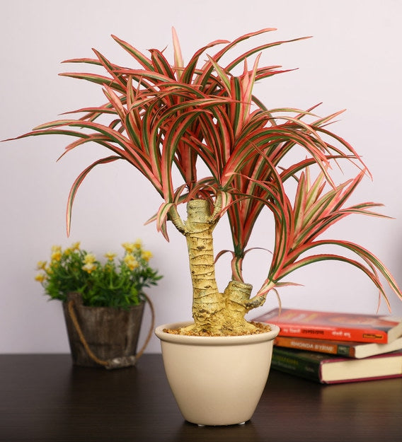 PolliNation Artificial Yucca Plant With Ceramic Pot (Pack of 2)
