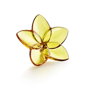 Bloom Crystal Flower, Amber by Baccarat