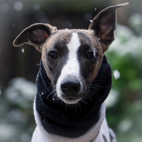 Black Fleece Essential Hound Snood