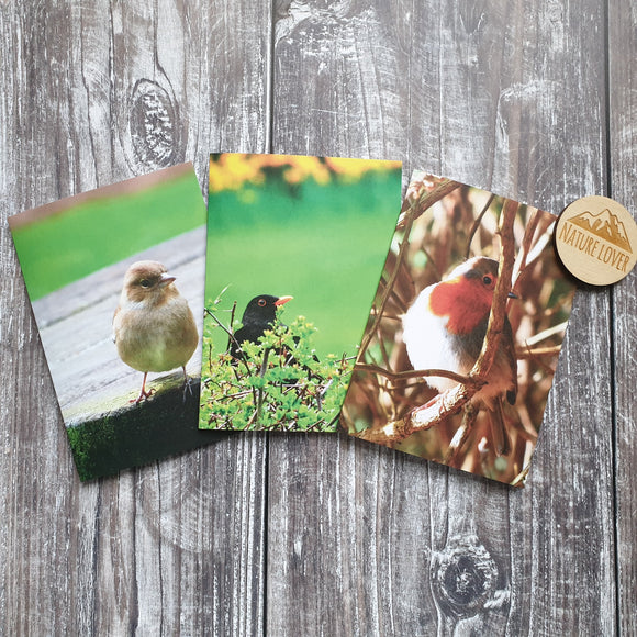 Songbirds Photographic Greeting Card - Set of 3 Cards