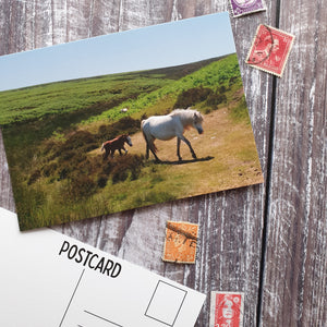 Long Mynd Pony and Foal Photographic Postcard