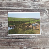 Mynd Ponies Photographic Print