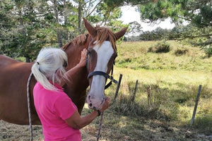 NZ School of Equine Bowen Therapy Certification