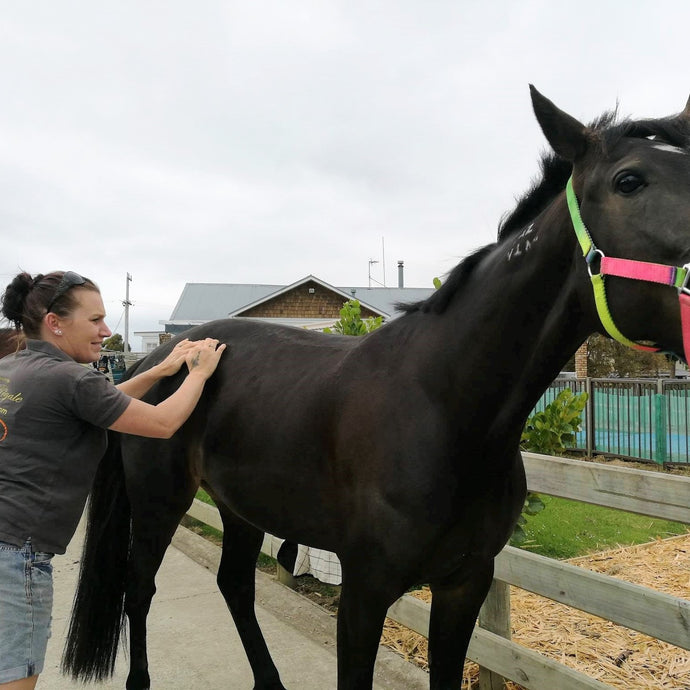Equine Bowen Therapy