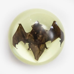 Bat Glow in the Dark Paperweight