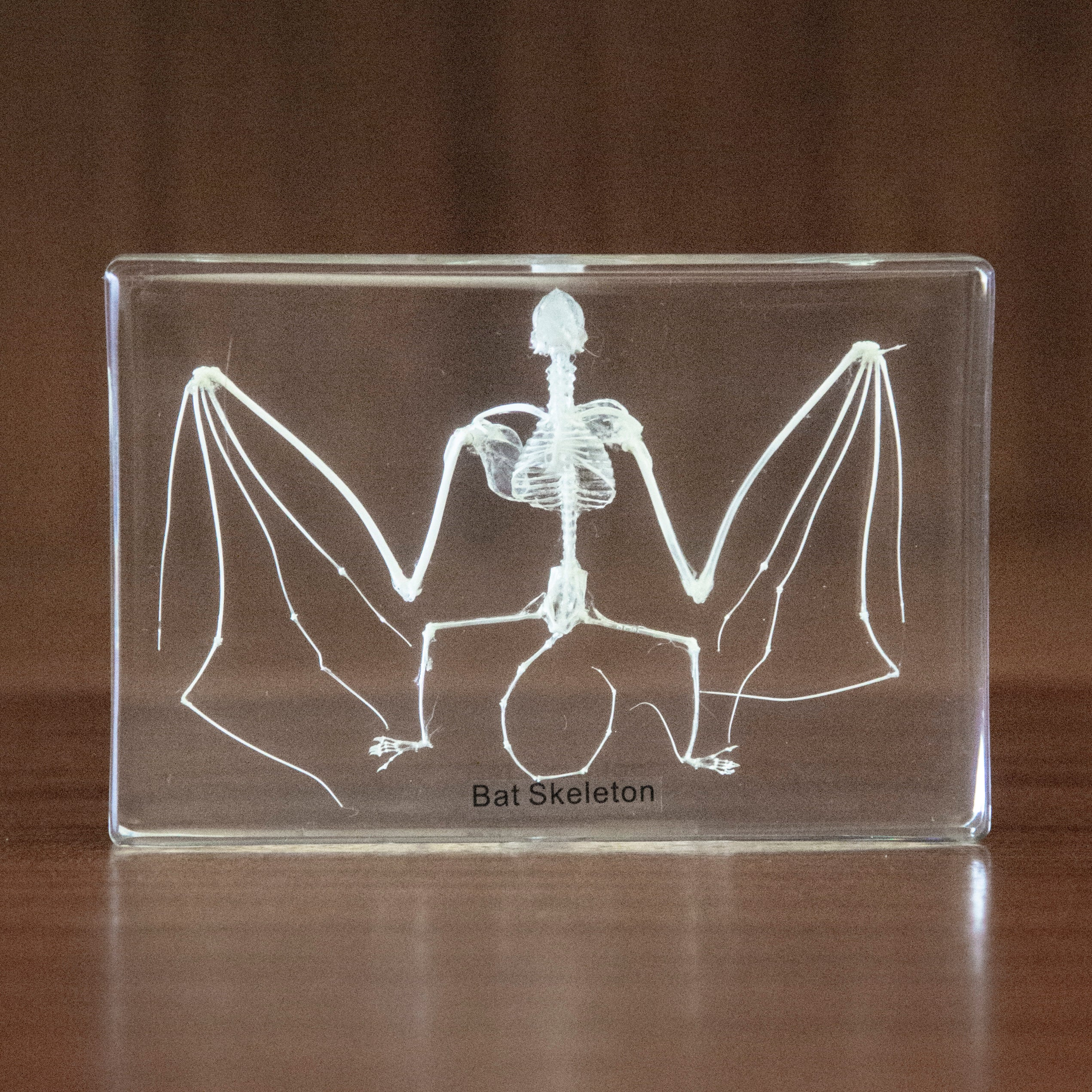 Bat Skeleton Resin Paperweight